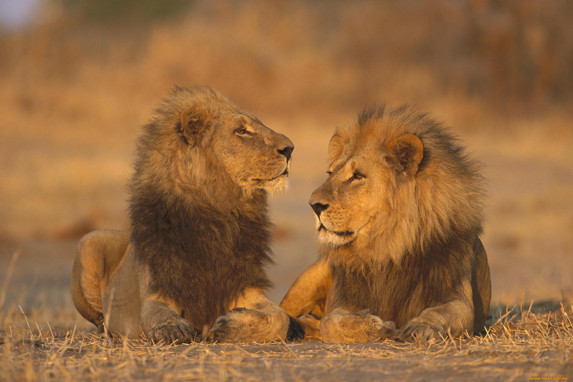 Картинка двое животных